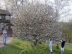 EasterTree2